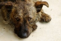 How to Clean Pet Urine From a Carpet Naturally   Dog Care ...