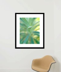 Framed Fine Art Abstract Nature Photography