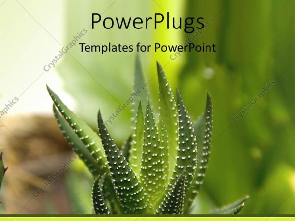 Powerpoint Template Green Cactus With Thick Stem