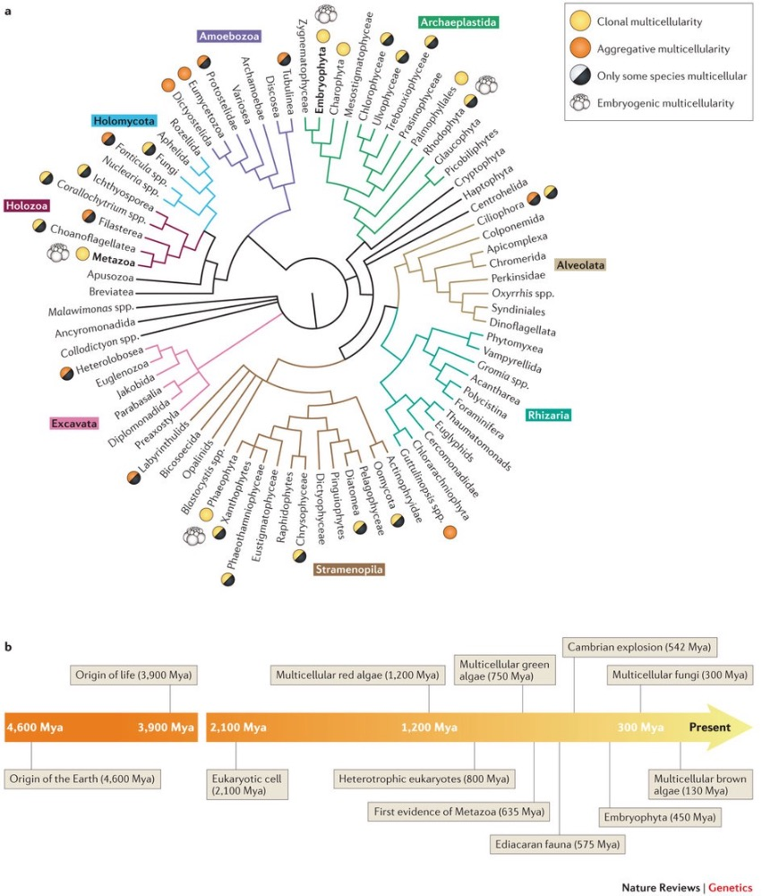 hight resolution of recently the identification and characterization of the genomic and cellular traits of the protists most closely related to animals