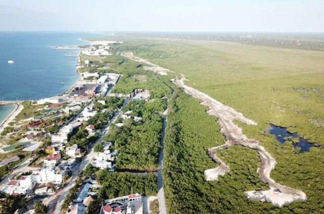 En Puerto Morelos: se pierde 40% del manglar