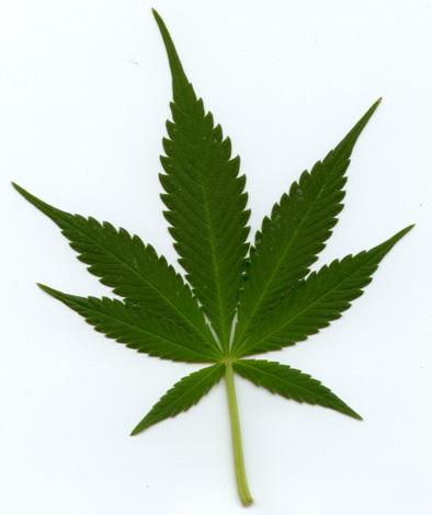 Tracy Blog Smoking Marijuana Shake Leaves
