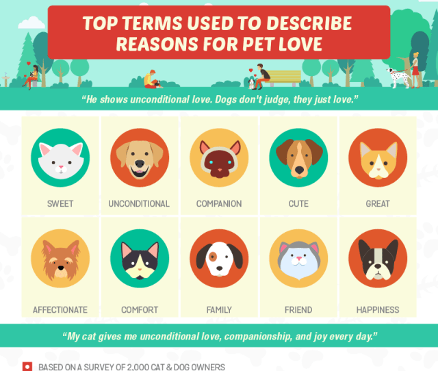 Reasons We Love Our Pets