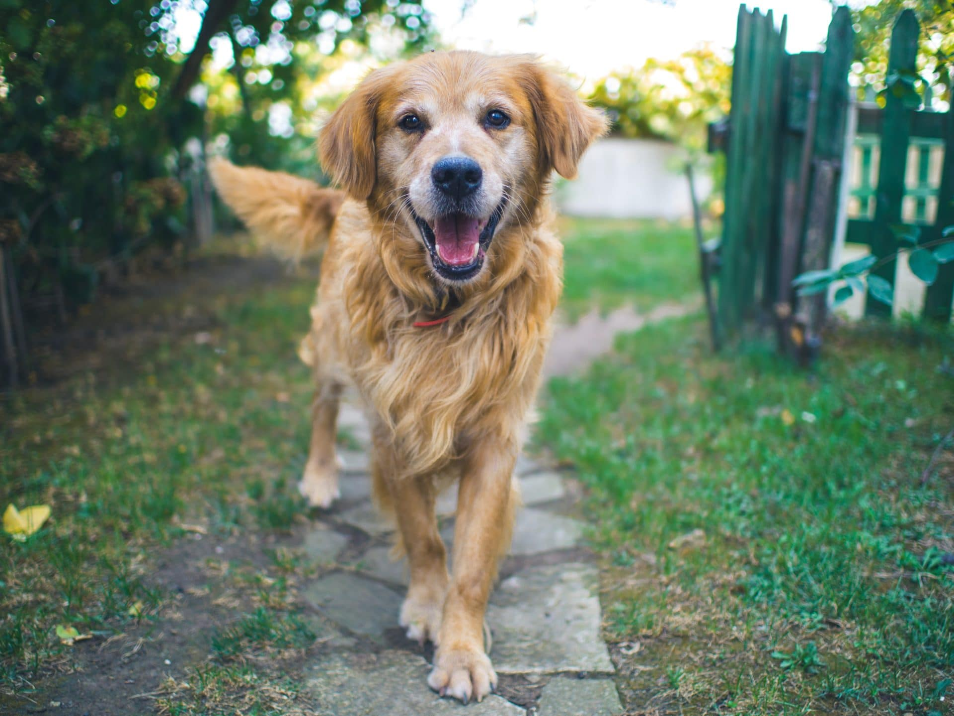 picture of dog on path for Real Estate News Podcast Episode #430