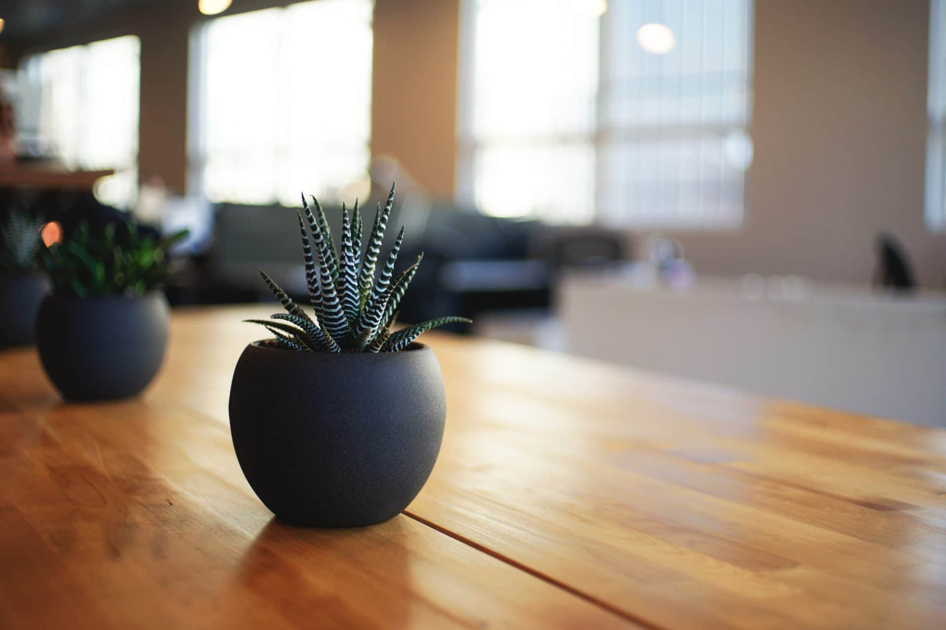 picture of plant on table for Real Estate News for Investors Podcast Episode #447