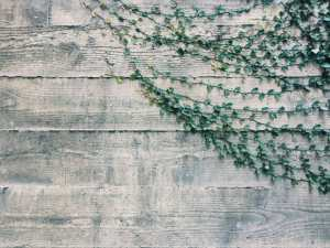 Picture of Vines on a Wall for Real Wealth Show Podcast Episode #627