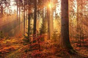 Picture of a Forest for Real Wealth Show Podcast Episode #667