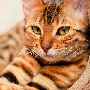 Psicoanálisis Significado De Soñar Con Gato Sueño Gato Mensaje