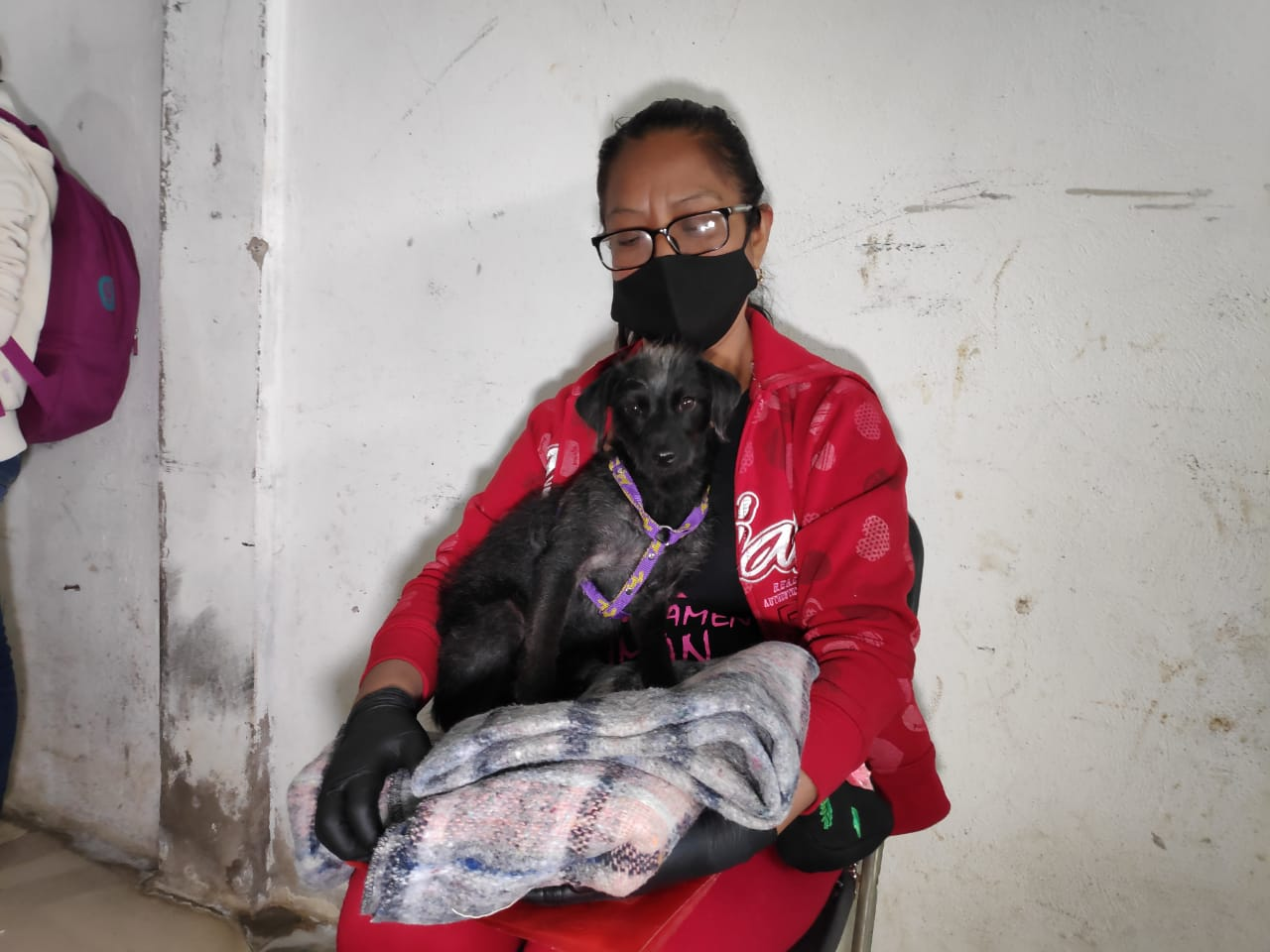 PROTECTORAS DE ANIMALES ALERTAN SOBRE VACUNA ANTIRRÁBICA APÓCRIFA