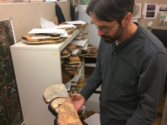 Elllis Margolis showing off some tree rings