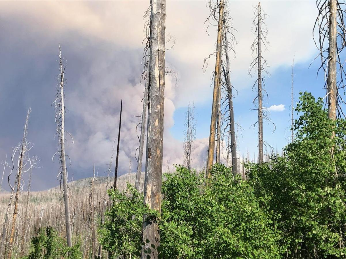 Burn scars can have lasting impacts on communities for years after wildfire - New Mexico Political Report
