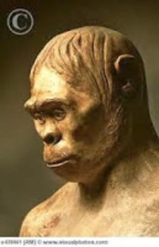 Manusia Purba Homo Wajakensis : manusia, purba, wajakensis, Manusia, Purba, Indonesia, Timeline, Timetoast, Timelines