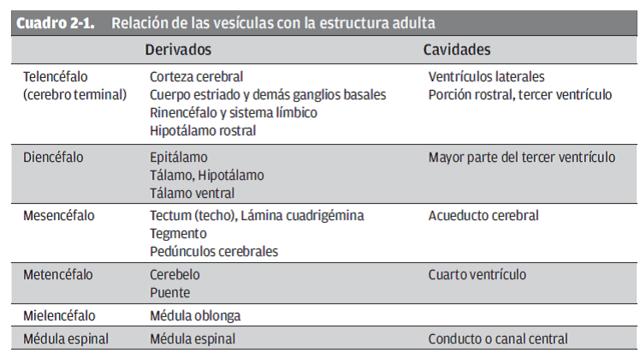 Desarrollo Cognitivo y Maduracin Cerebral timeline  Timetoast timelines