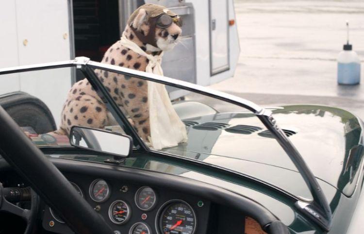 Pet Jaguar