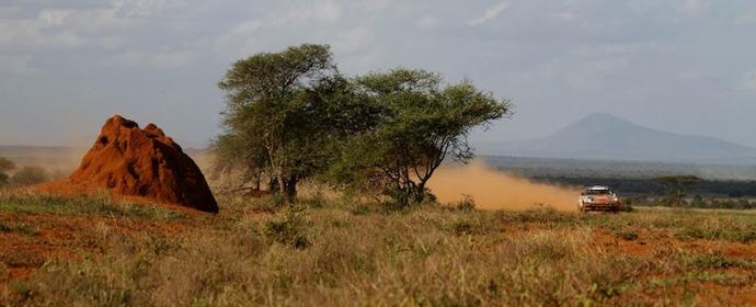 Porsche 911 Africa Rally picture