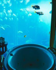 Atlantis Palm Dubai Hotel Resort Stephanie Drenka
