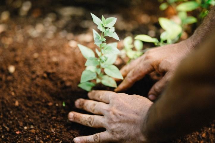 herb, relish, vegetable, oregano, care, Harvest, Gardening, Garden, farming, planting, Plant, Grow