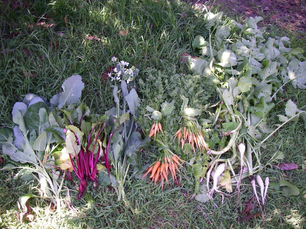 Childrens Raised Garden Planter
