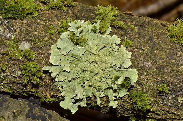 I Like Lichens