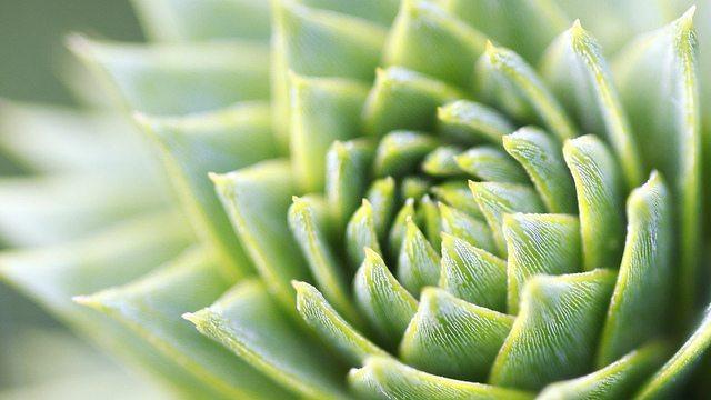 Plants As Aliens