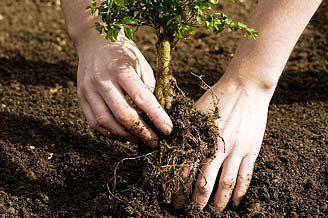 Managers of Human Nature: A Job Description for Spiritual Naturalists