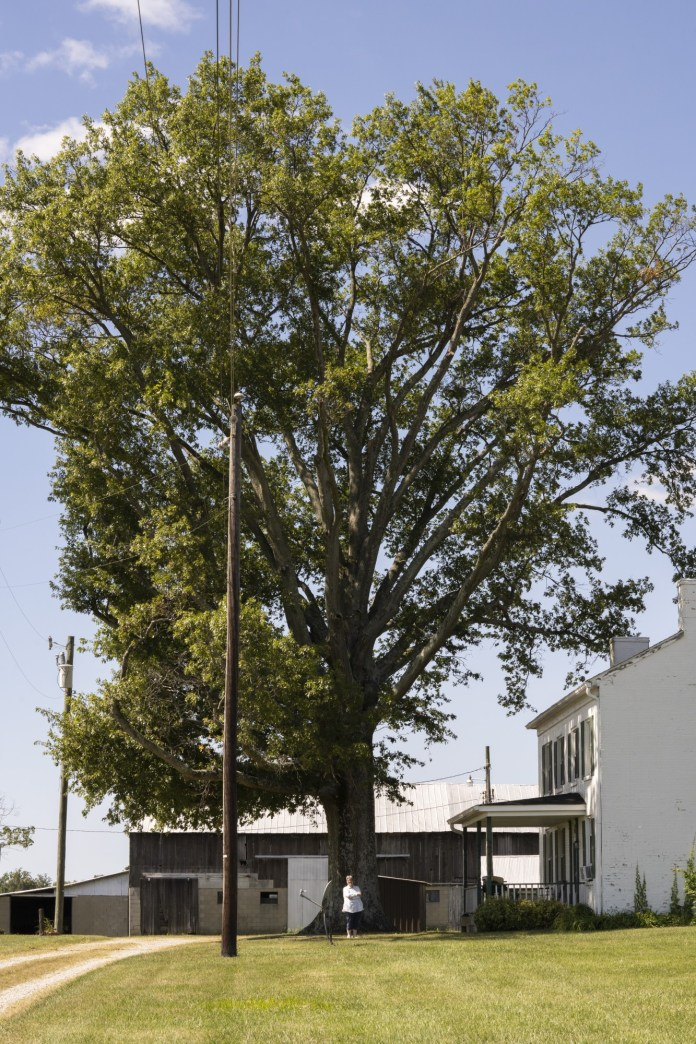 Iris Wilson, 65, of Hamilton Township, Ohio, with her Pin Oak Tree on Friday, Sept. 18, 2020.