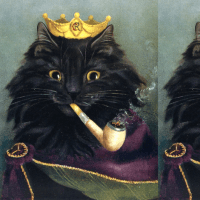 black cats persian Maine Coon kings emperors royalty ...