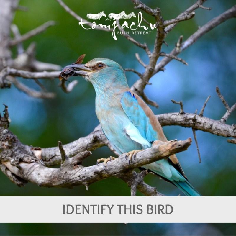 Identify the Bird Quiz