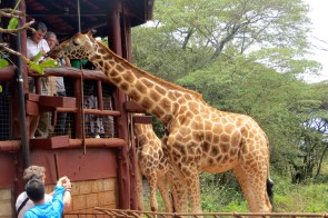 At the Giraffe Center