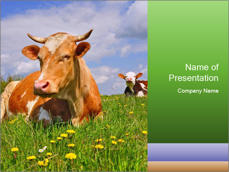 Cow on a summer PowerPoint Template & Backgrounds ID 0000090585 ...