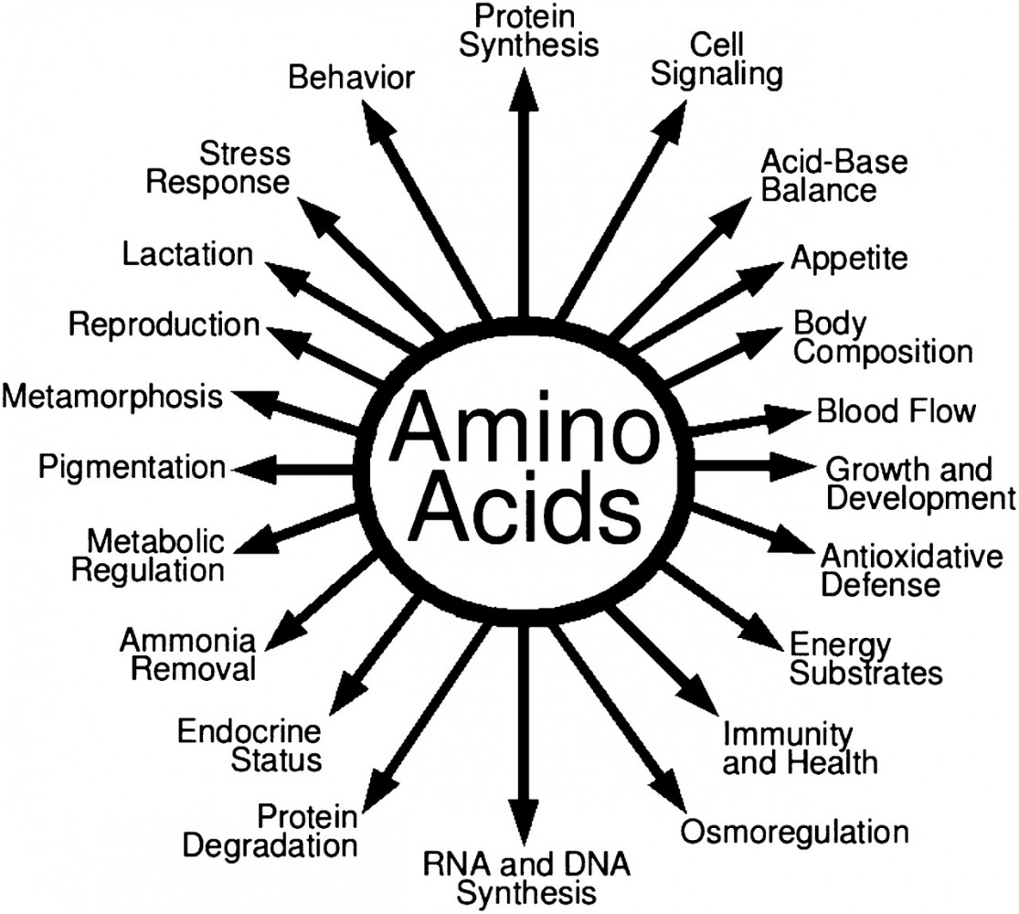 The Friday Fit Bit Amino Acids A Picture Is Worth A