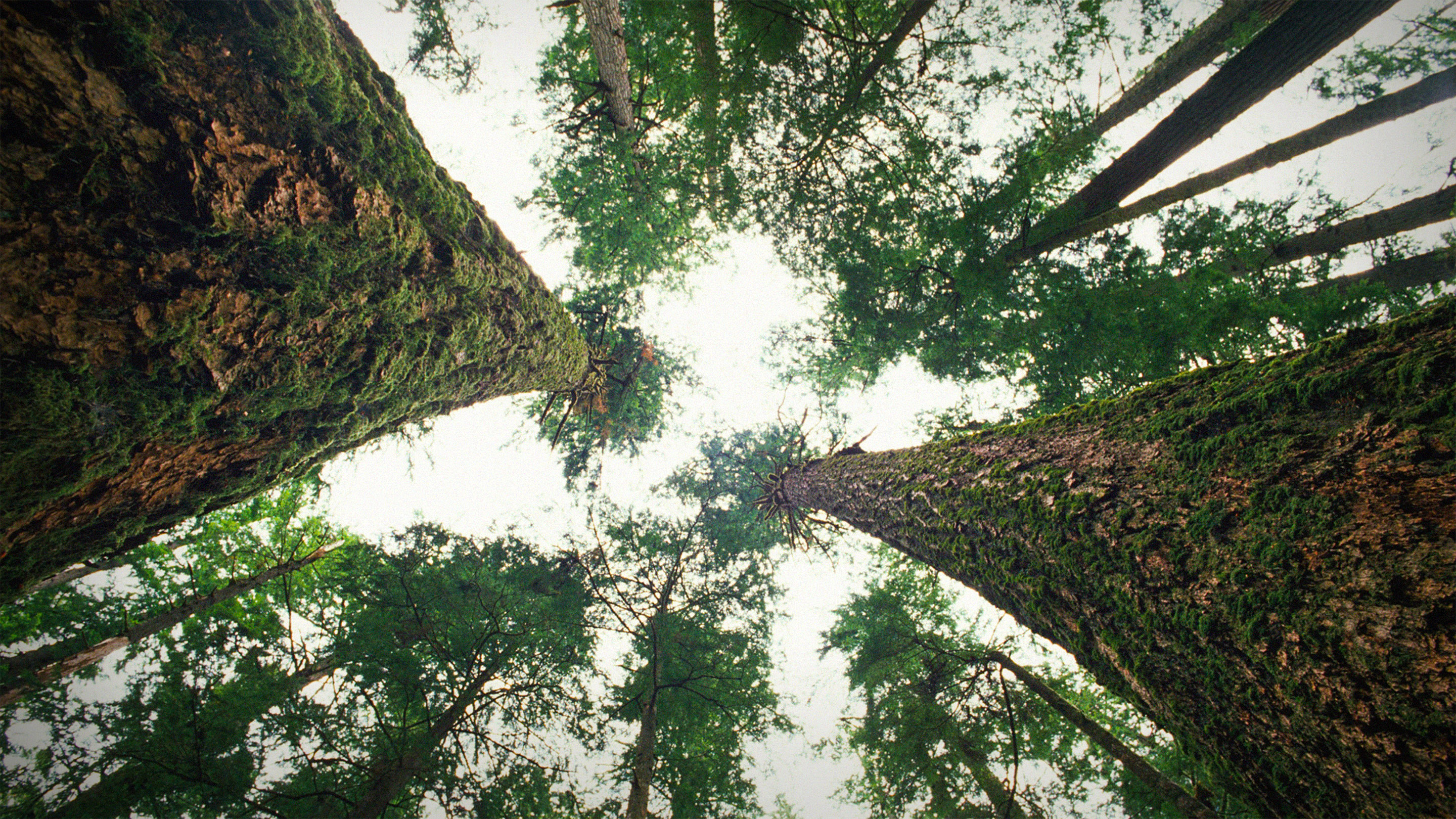 We learn not only how her ideas first formed, but how they were shaped by her own life events. Suzanne Simard How Trees Talk To Each Other Ted Talk