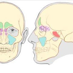 Ethmoid Bone Diagram Create A Venn Comparing Osmosis And Diffusion Skull Sinus Wiring All Data The Paranasal Sinuses Structure Function Teachmeanatomy Eye Fig 1 Showing Location