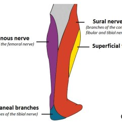 Lower Leg Nerve Diagram 2001 Impala Wiring The Tibial Course Motor Sensory Teachmeanatomy Fig 1 Cutaneous Innervation To Posterior Contributes Via Sural And Calcaneal Branches