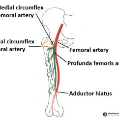 Medial Lower Leg Muscles Diagram Wiring For Switch To Light The Hip Joint Articulations Movements Teachmeanatomy Fig 2 And Lateral Circumflex Femoral Arteries Are Major Blood Supply