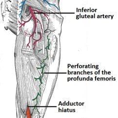 Vascular Anatomy Diagram Lower 2003 Saturn Ion Engine Arteries Of The Limb Thigh Leg Foot Teachmeanatomy Fig 2 Arterial Supply To Posterior And Gluteal Region