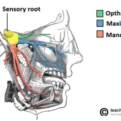 Trigeminal Nerve Diagram Directv Swm 32 Wiring The Cn V Course Divisions Teachmeanatomy Fig 1 Overview Of Deep Distribution And Its Terminal Branches