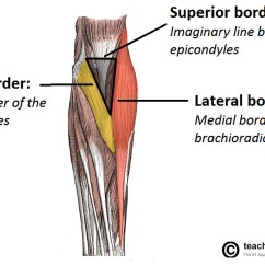 Forearm Bones Diagram Meyer Snow Plow Wiring E60 The Cubital Fossa Borders Contents Teachmeanatomy Fig 1 Anterior View Of Superficial Showing