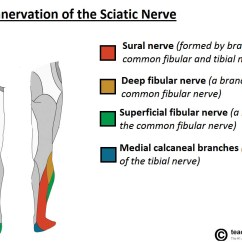 Lower Leg Nerve Diagram 97 S10 Abs Wiring The Sciatic Course Motor Sensory Teachmeanatomy Fig 4 Cutaneous Innervation Of Terminal Branches