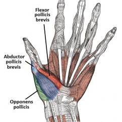 Hand Muscles Diagram 7 Way Trailer Wire The Of Thenar Hypothenar Teachmeanatomy Figure 1 Palmar View