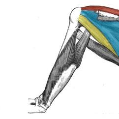 Arm Muscles Anatomy Diagram Blank Vl Wiring Of The Shoulder Region - Teachmeanatomy