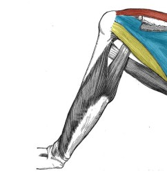 fig 1 3 the rotator cuff muscles which act to stabilise the shoulder joint  [ 1624 x 566 Pixel ]