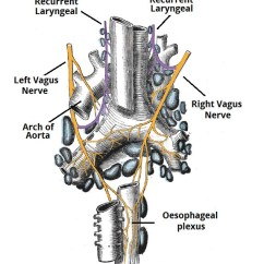 Vagus Nerve Diagram Rule Bilge Pump Float Switch Wiring The Cn X Course Functions Teachmeanatomy Fig 1 Origin Of Recurrent Laryngeal Nerves