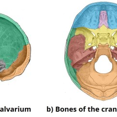 Human Skull Bones Diagram Labeled Cj5 Steering Column Of The - Structure Fractures Teachmeanatomy
