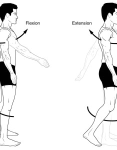 Fig  flexion and extension also anatomical terms of movement rotation teachmeanatomy rh teachmeanatomyfo