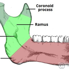 Human Mandible Diagram Kia Rio 2001 Stereo Wiring The Structure Attachments Fractures Teachmeanatomy Fig 2 Internal Surface Of And Its Bony Landmarks