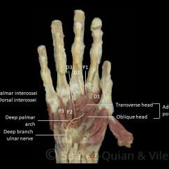 Ulnar Nerve Diagram Ge Kv2c Wiring The Muscles Of Hand - Thenar Hypothenar Teachmeanatomy
