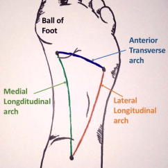 Bones In Your Foot Diagram Computer Network Symbols The Arches Of Longitudinal Transverse Teachmeanatomy Fig 1 And
