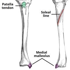 Tibia And Fibula Blank Diagram Cbr 600 F4i Wiring Bone 13 12 Kenmo Lp De The Proximal Shaft Distal Teachmeanatomy Rh Info Tibial Plateau Anatomy