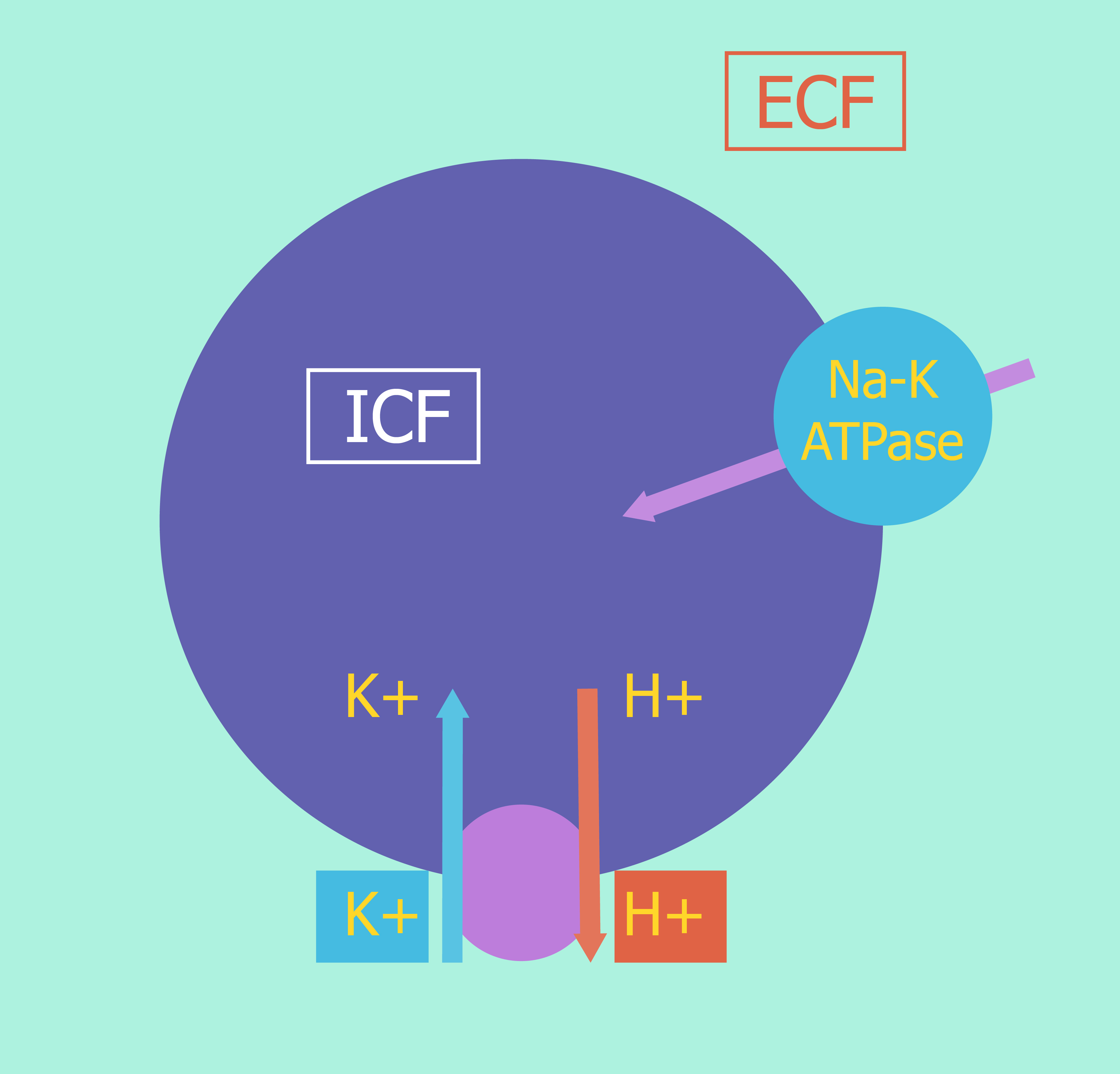 Internal Balance Of Potassium